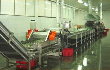 vegetable_processing_line.jpg